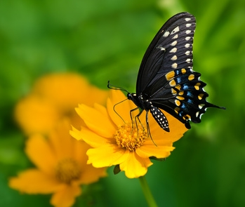 Deck Gardens that Attract Butterflies