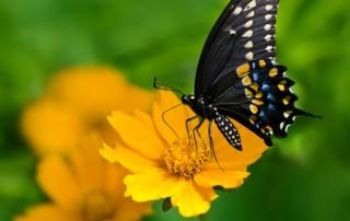 Butterfly deck gardens